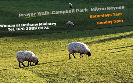 Sheep, Grazing, Park, Prayer, Walk